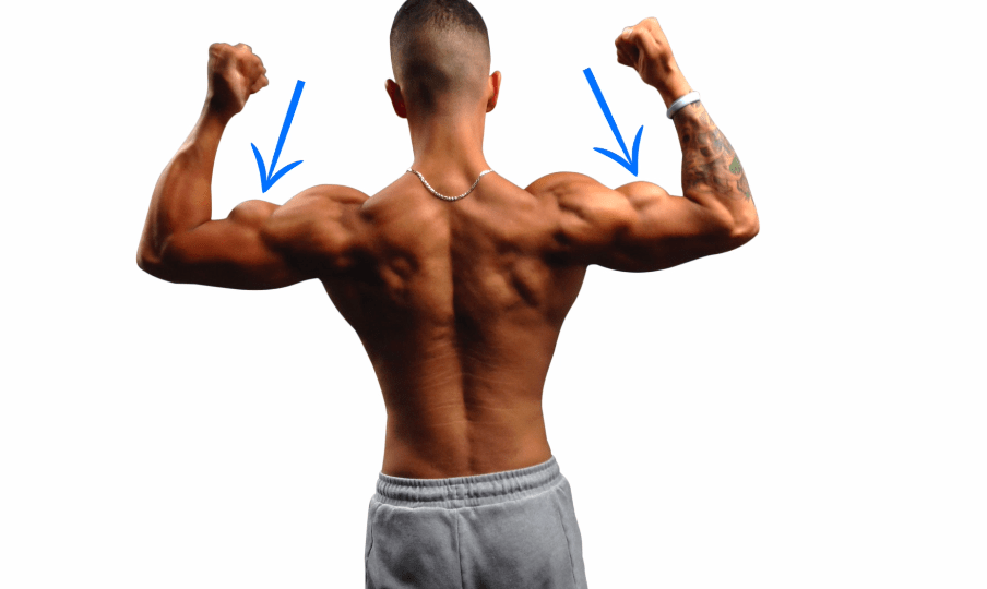 biceps from back