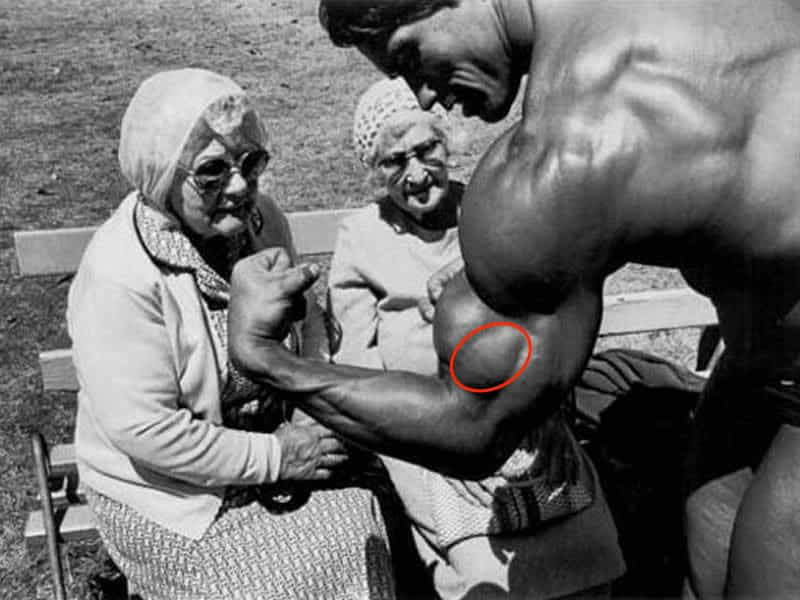 brachialis muscle for bicep workout