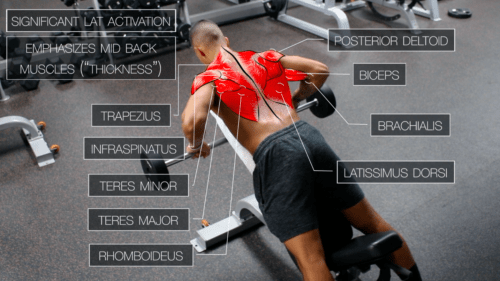 chest supported row upper body exercise
