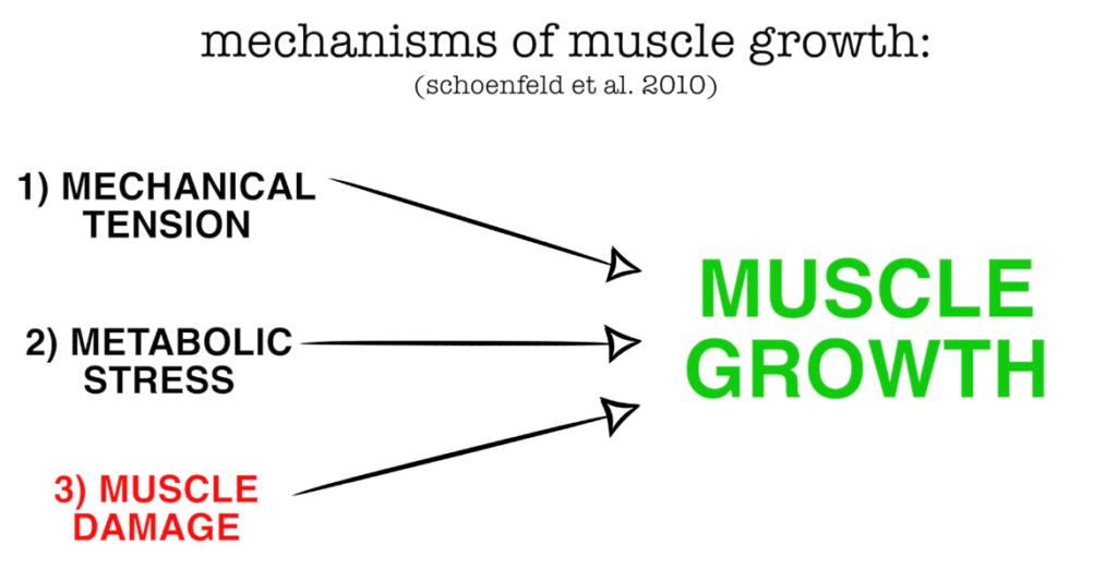 muscle soreness study