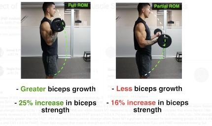 biceps curl full range of motion