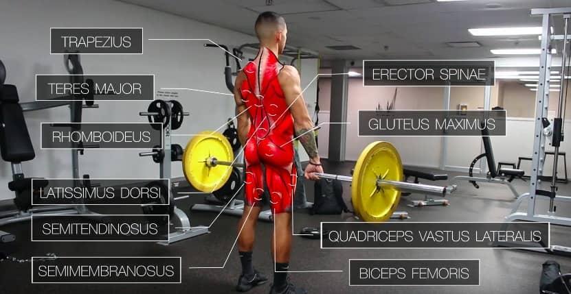 deadlift compound back exercise