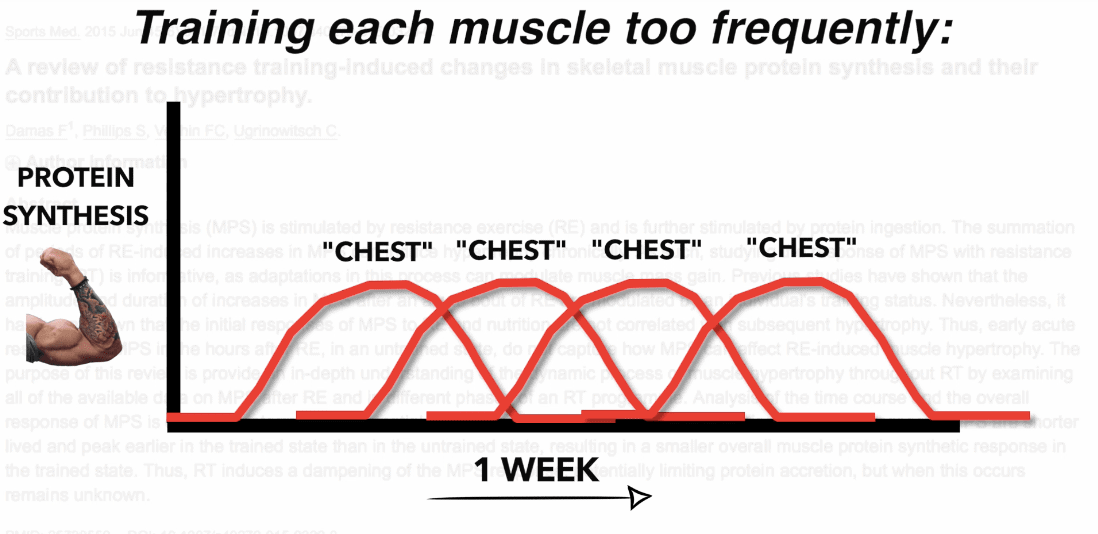 training each muscle too frequently
