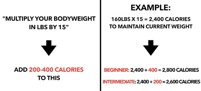 calculating calories for muscle growth
