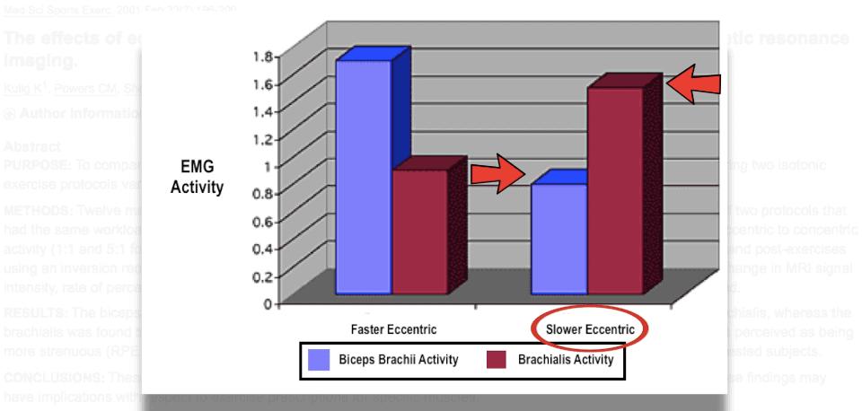 biceps versus brachialis activity