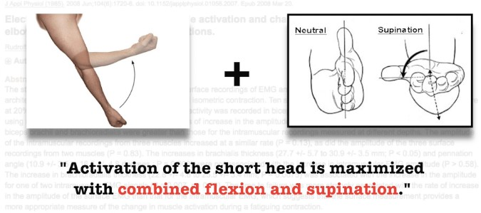 short head of biceps
