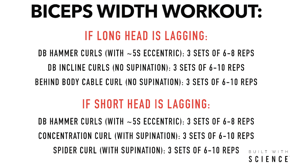workout for wider biceps