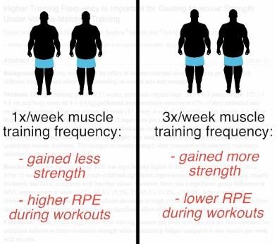 1 week 3 week training frequency