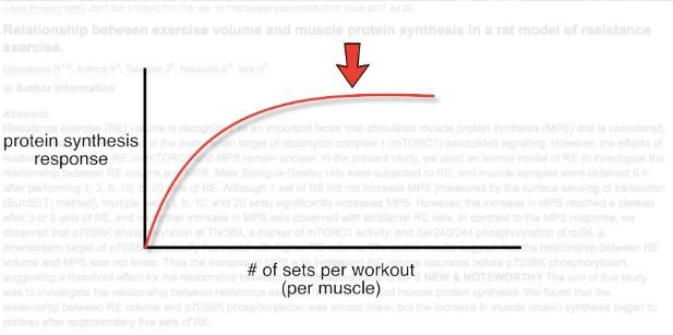 تخليق البروتين العضلي