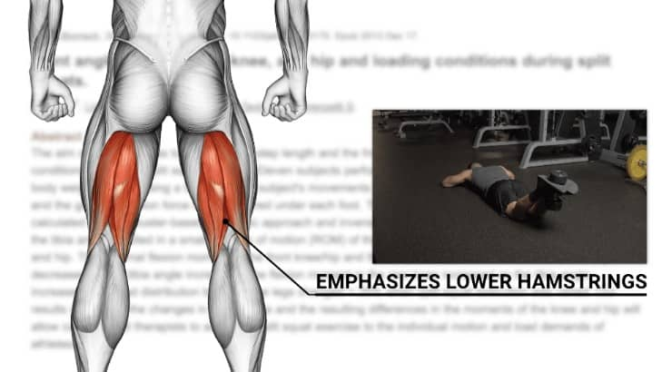lower hamstrings
