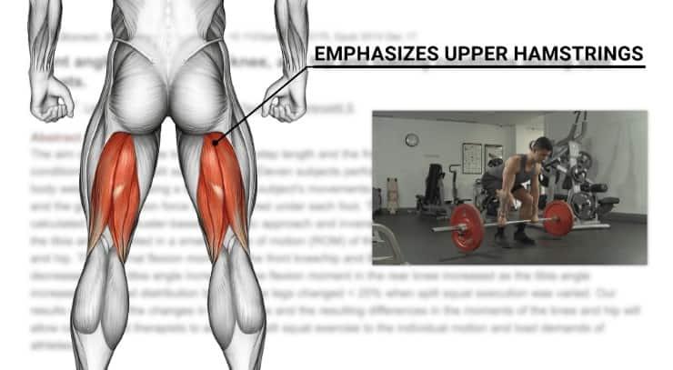 upper hamstrings