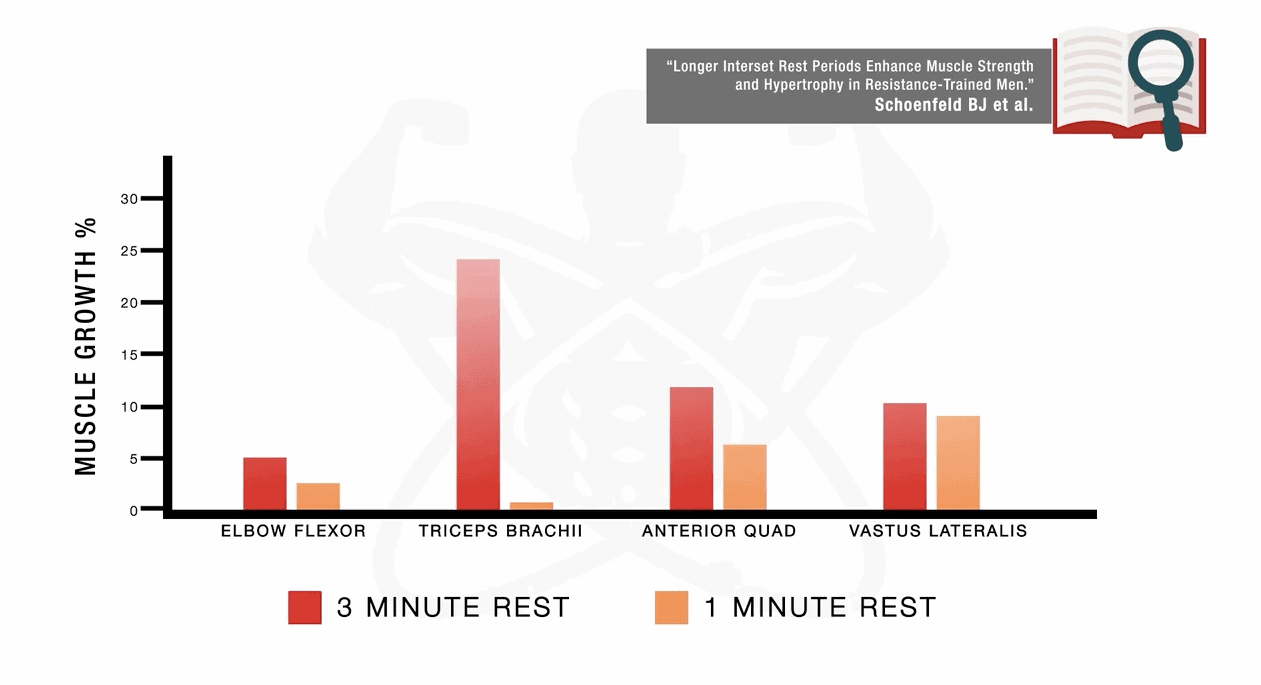 muscle growth rest periods