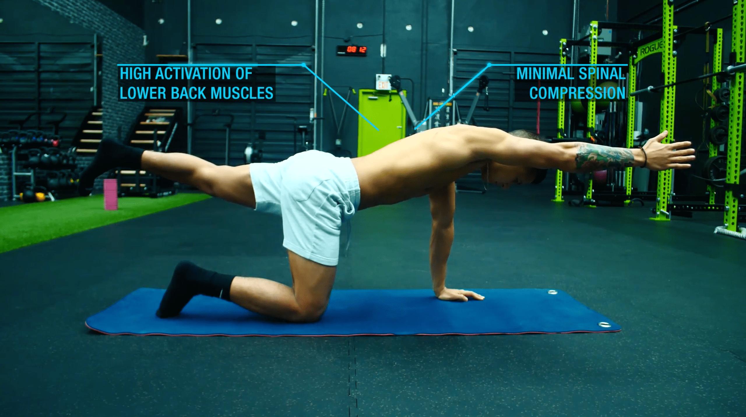 Best lower back exercises bird dog-min