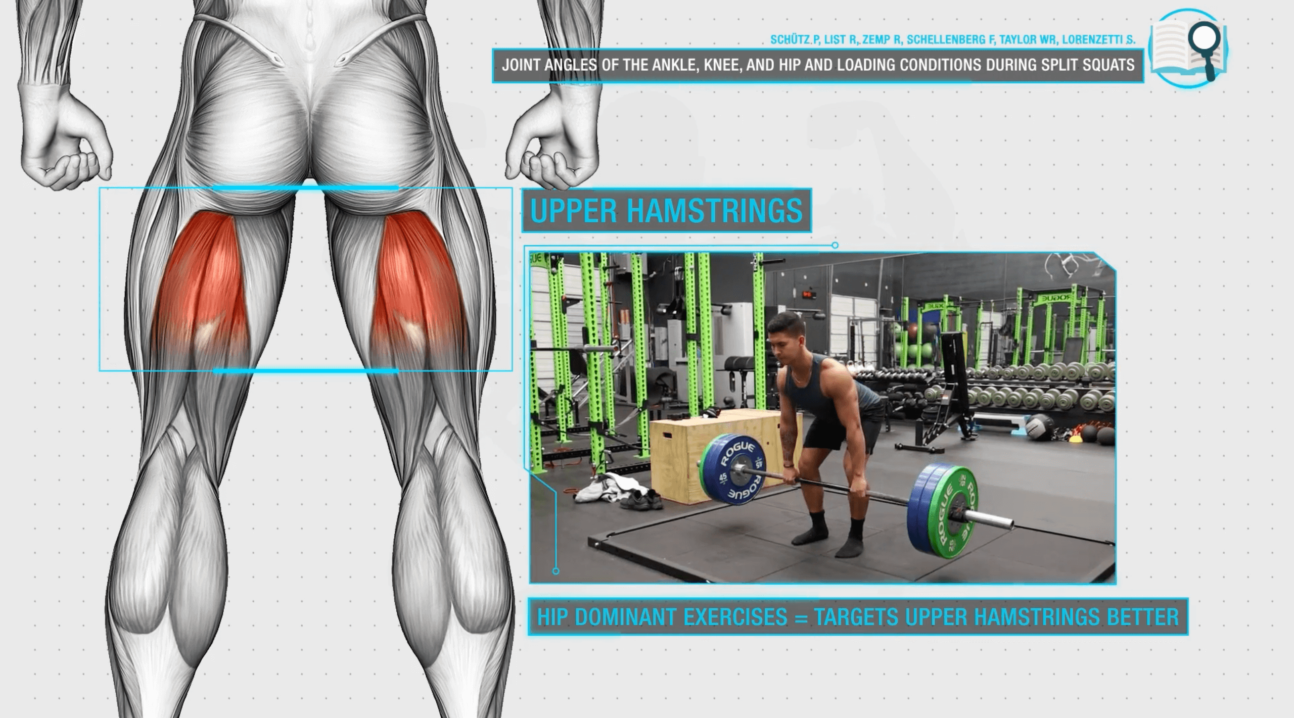 Upper hamstrings development