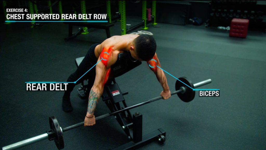 Chest supported rear delt row anatomy