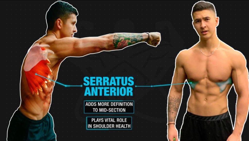 Functions of serratus anterior
