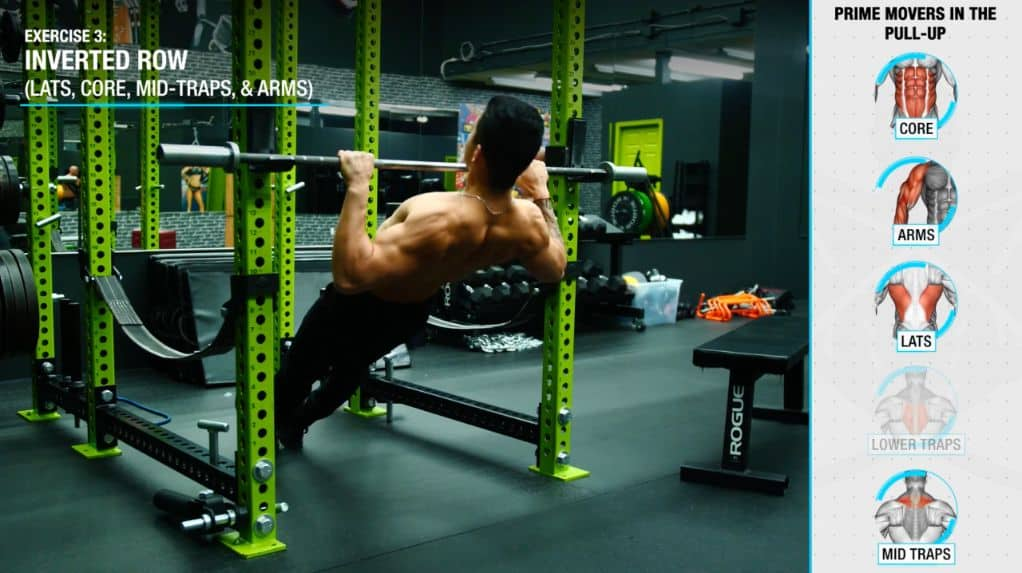 Inverted row muscles