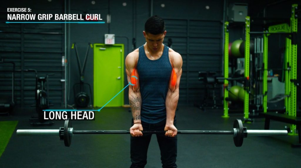 Narrow grip barbell curl anatomy