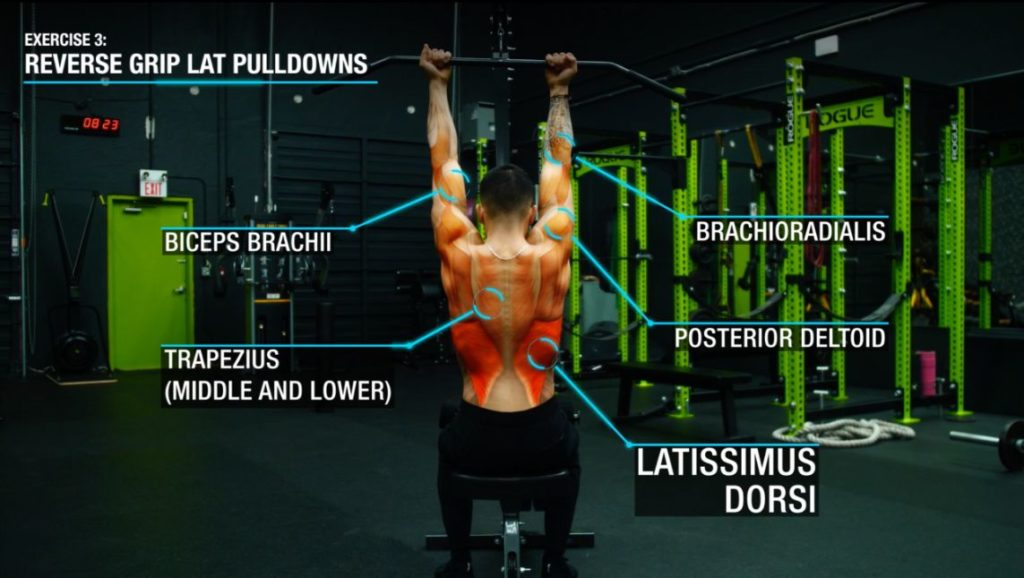 Reverse grip lat pulldowns anatomy