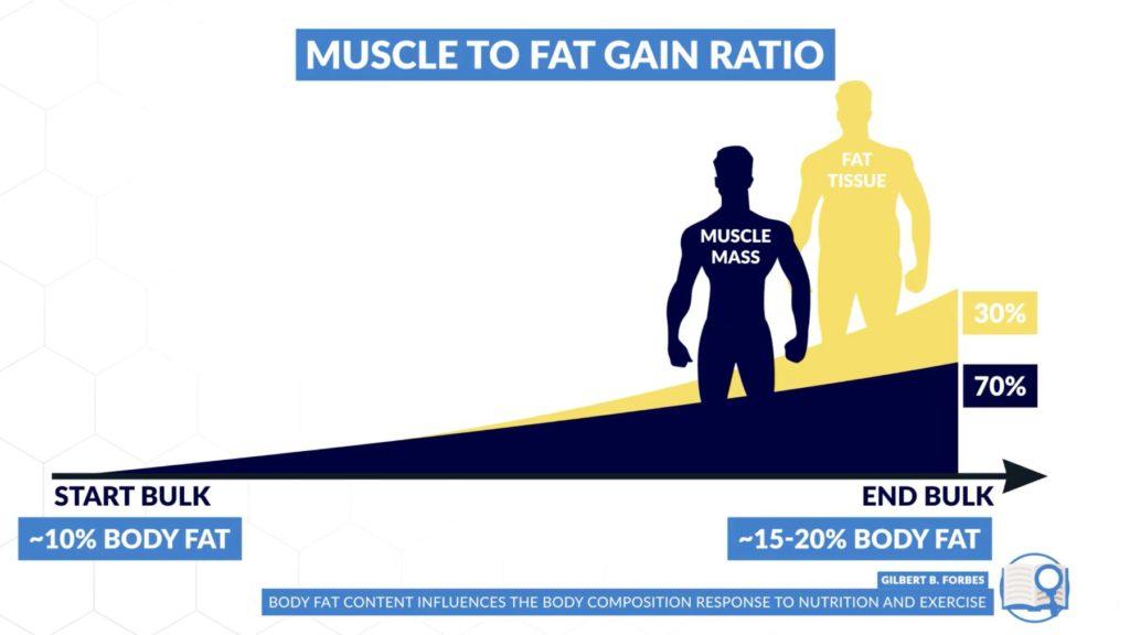 Muscle to fat gain ratio body fat