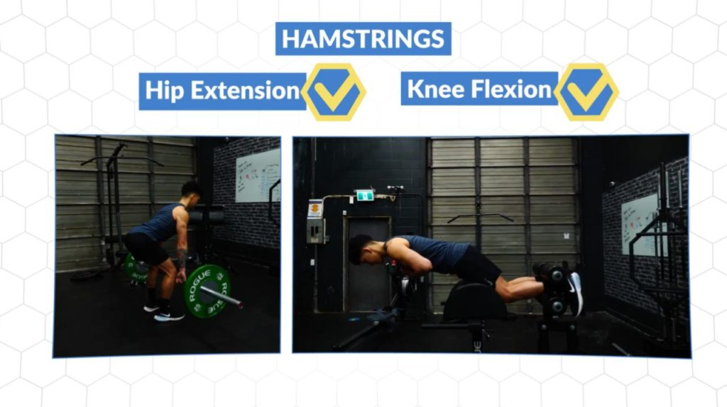 Include both hip extension and knee flexion movements for optimal hamstring growth